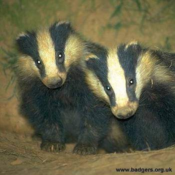 """"""" We need a science-led policy to manage cattle movements and develop a vaccine to tackle TB in badgers and cattle.""""  Mary Creagh, Labour"""